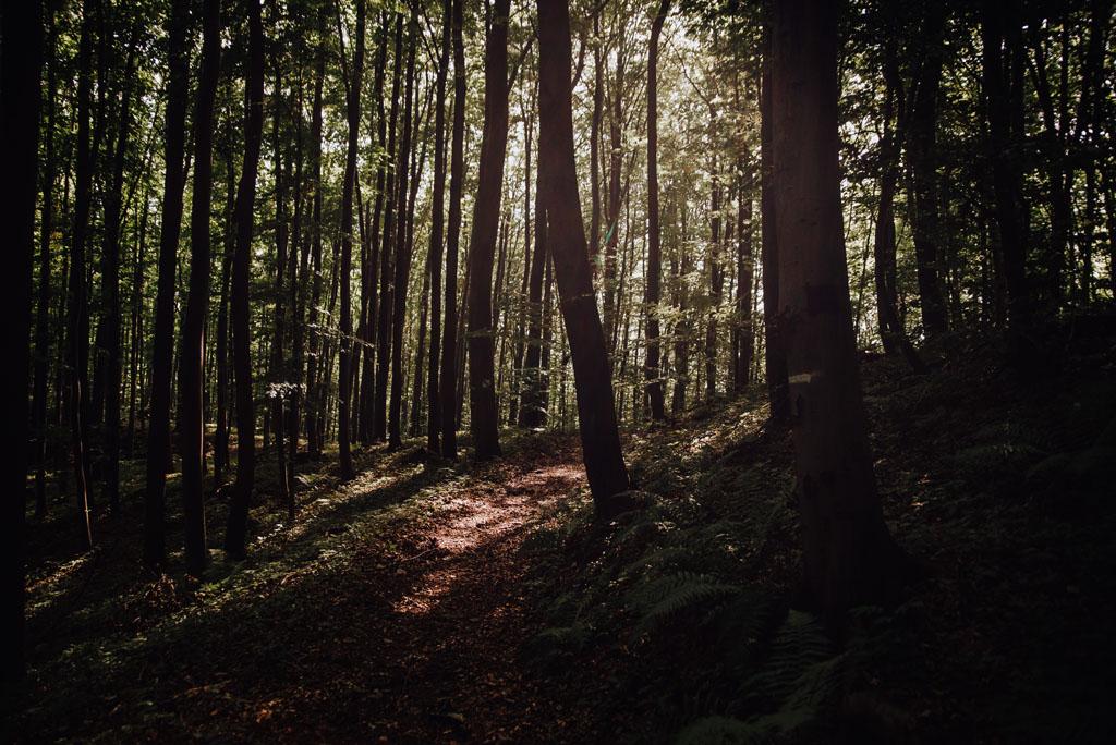 Magiczny las w Jaroszowcu