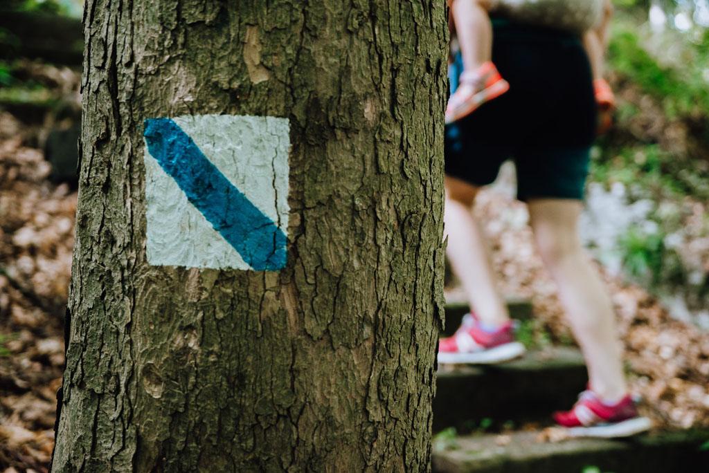 Niebieska ścieżka Góra Stołowa w Jaroszowcu