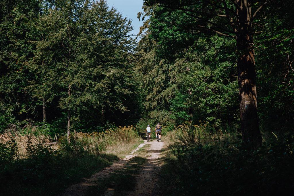Rowerzyści na Jurze Krakowsko-Częstochowskiej