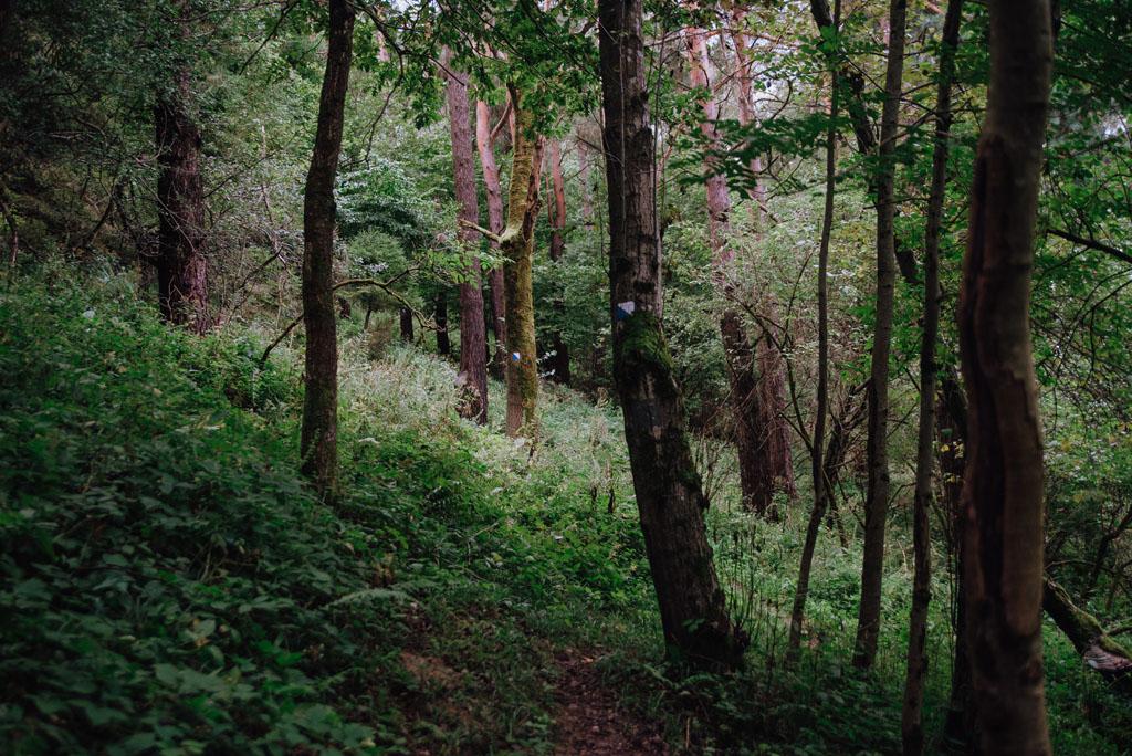 Ścieżka niebieska na szczyt Orlich