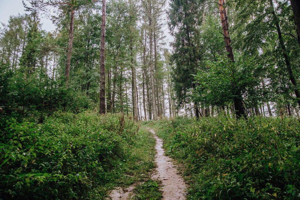 Strome podejście na Gromadzyń