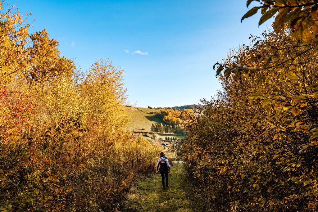 Szlak turystyczny Las Plebański