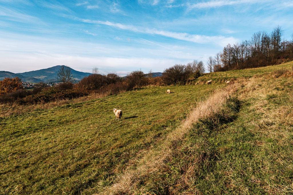 Szlak na Grunwald - Mszana Dolna