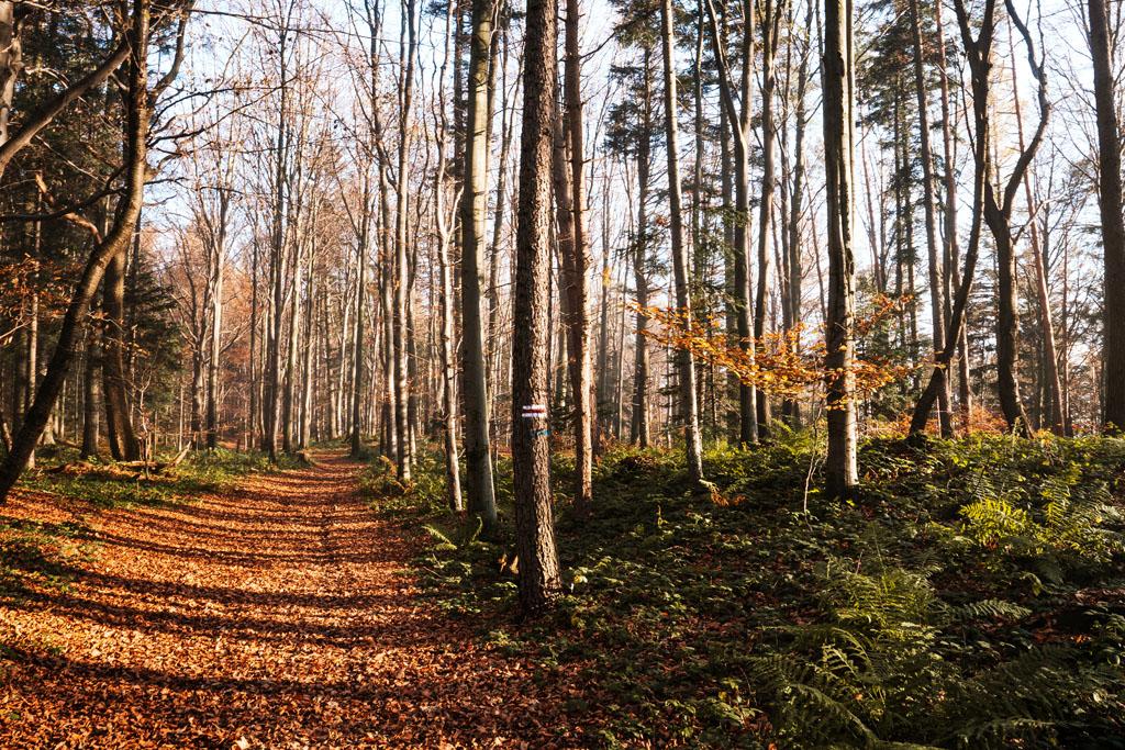 Jesienny las pod Uklejną
