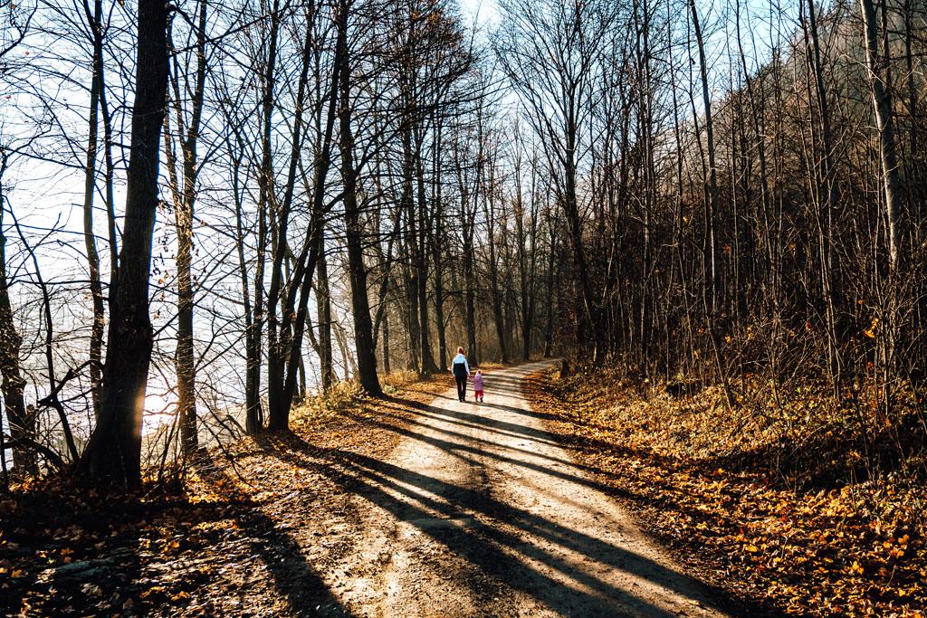 Początkowo szlak na Sokolicę prowadzi prostą drogą