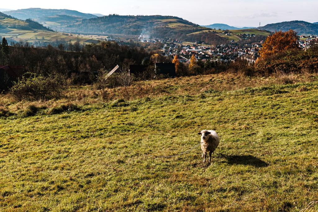 Widok na Mszana Dolna