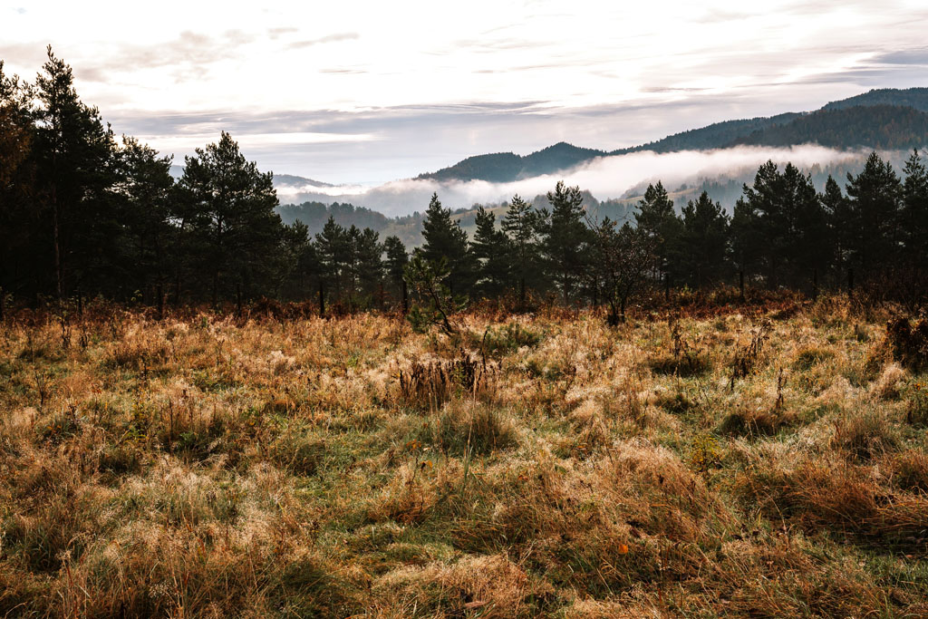 Poranne mgły nad Piwniczną-Zdrojem