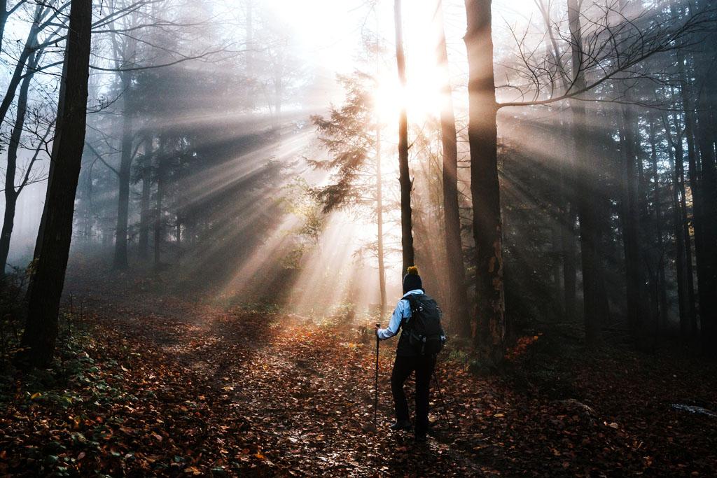 Prześwity w lesie nad Myślenicami
