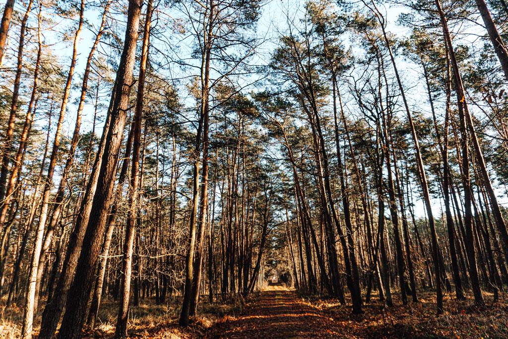 Lasy Radłowskie koło Tarnowa