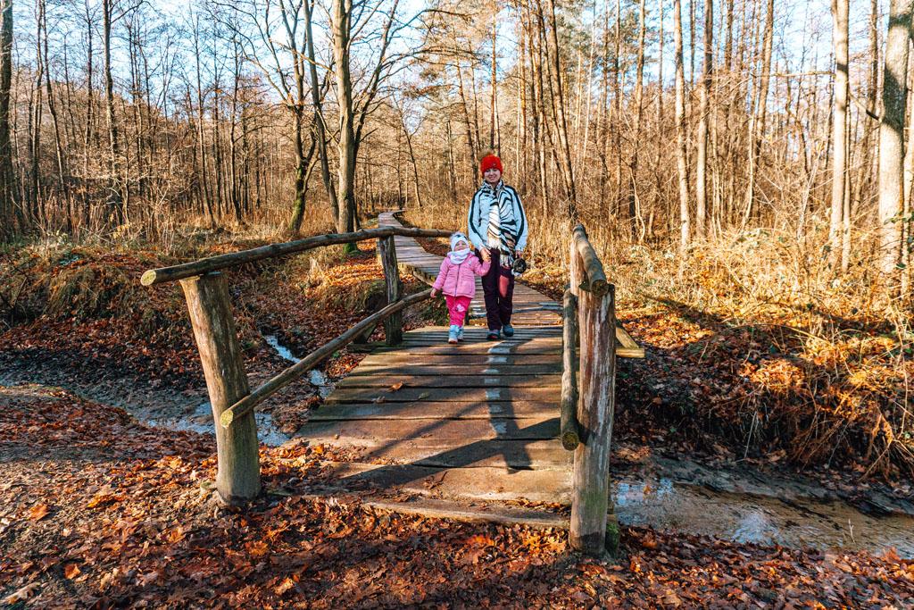 Ścieżka zdrowia Lasy Wierzchosławickie