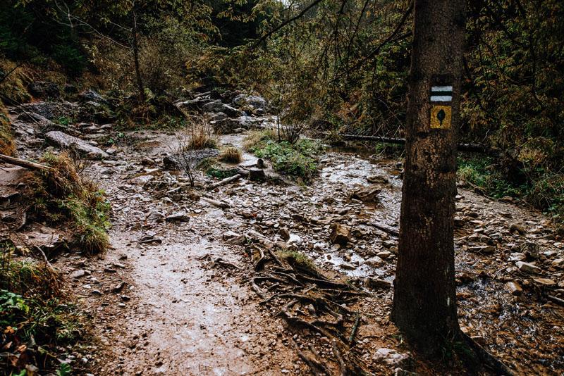 Przez Wąwóz Homole prowadzi zielony szlak