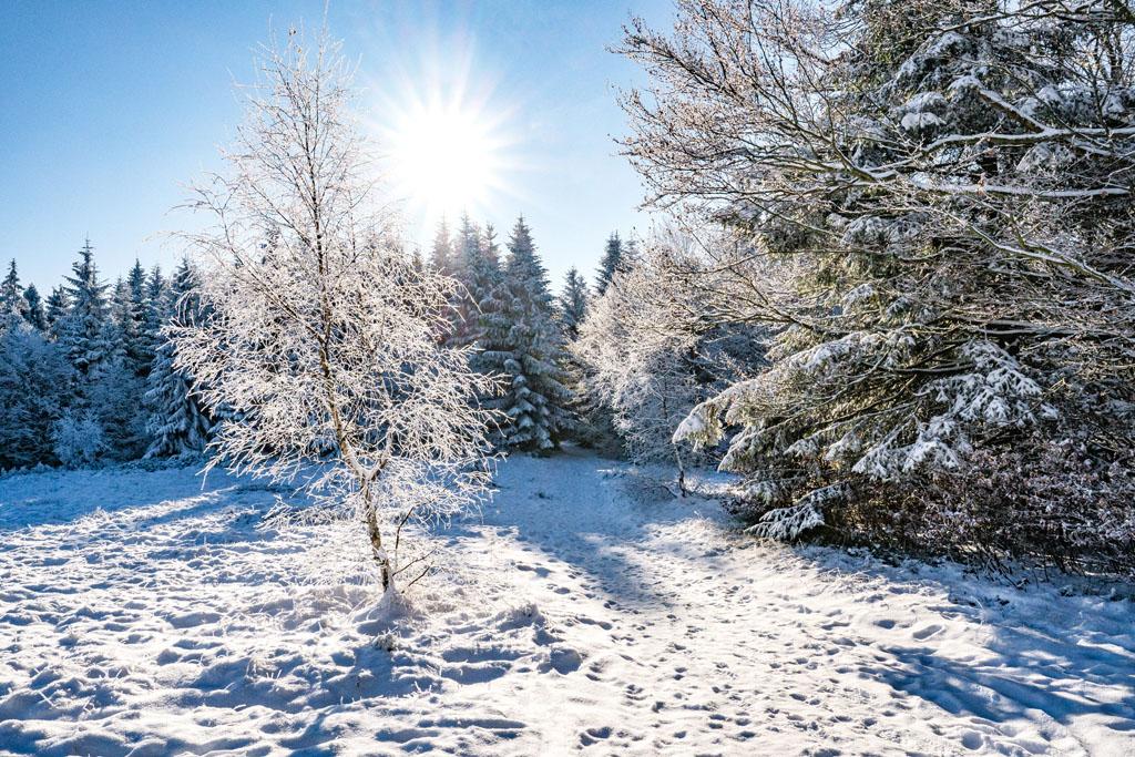 Zima w górach ośnieżone drzewo