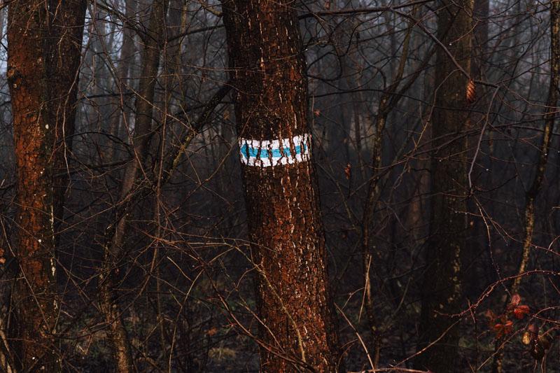 Znak niebieski na drzewie