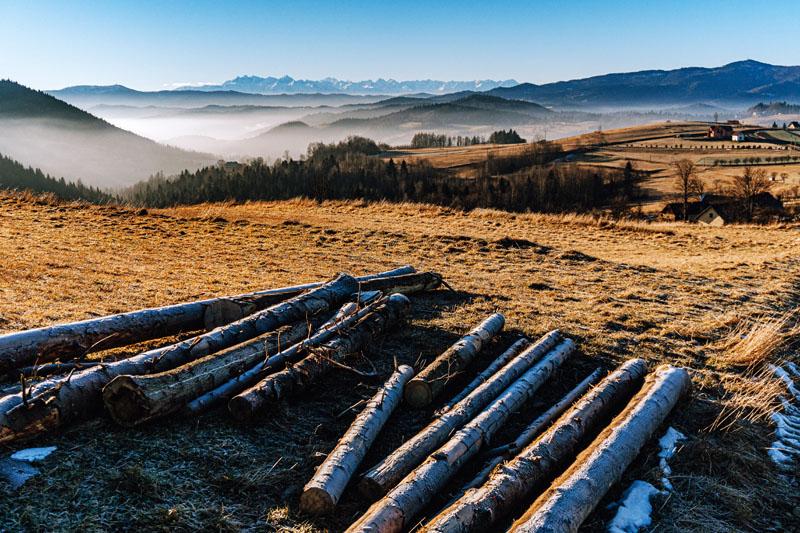drzewa tatry krajobraz