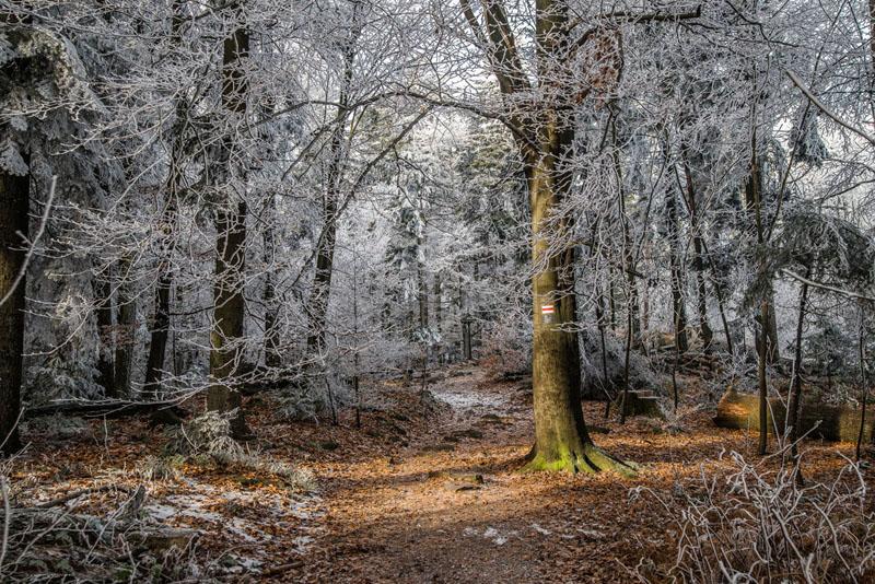 Góry Świętokrzyskie - szlak czerwony