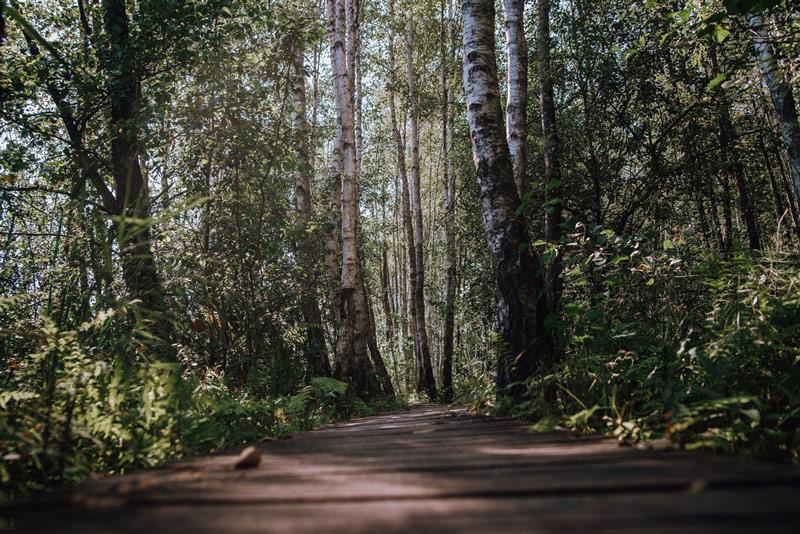 Atrakcje Poleski Park Narodowy