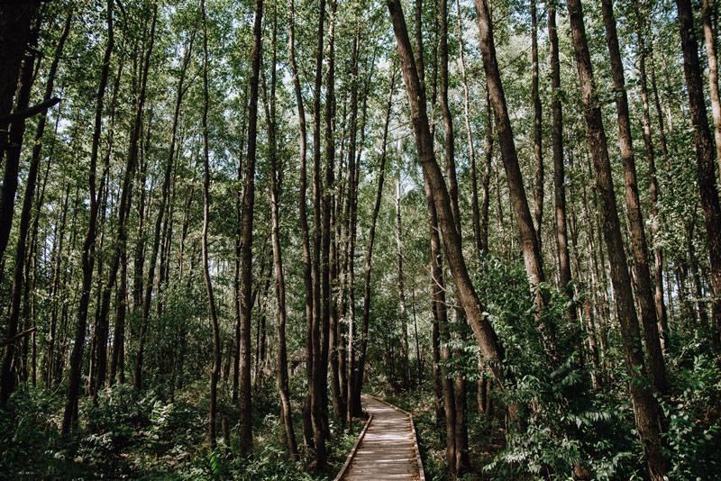 Poleski Park Narodowy - majówka 2021