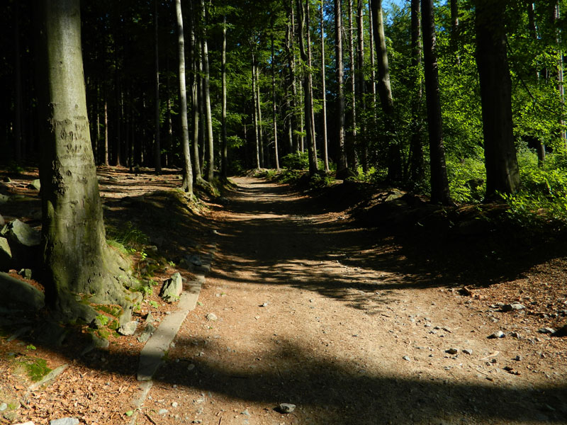 Szlak na Ślężę z Przełęczy Tąpadła