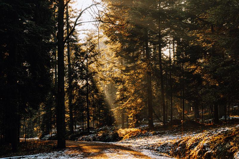 Prześwity drzewa