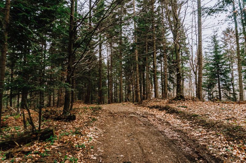 Szlak na Suchą Homolę