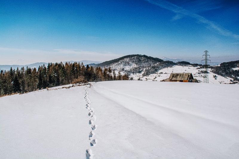 Zejście z Pusty Wielkiej do Wierchomli