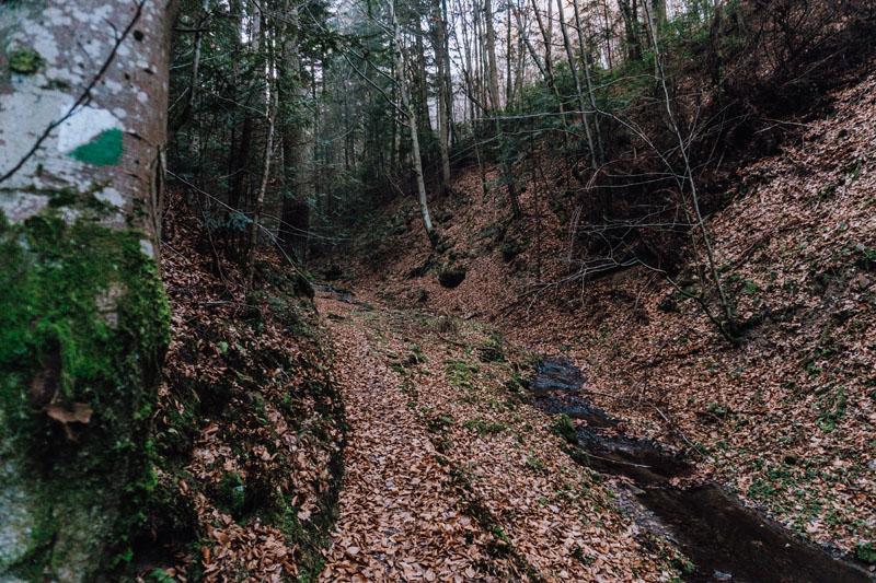 Zielona ścieżka do Jaru