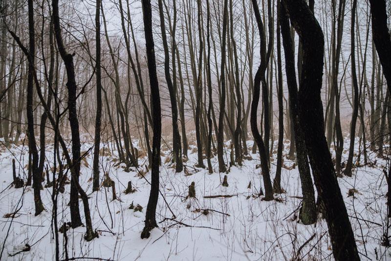 Las Błędowski