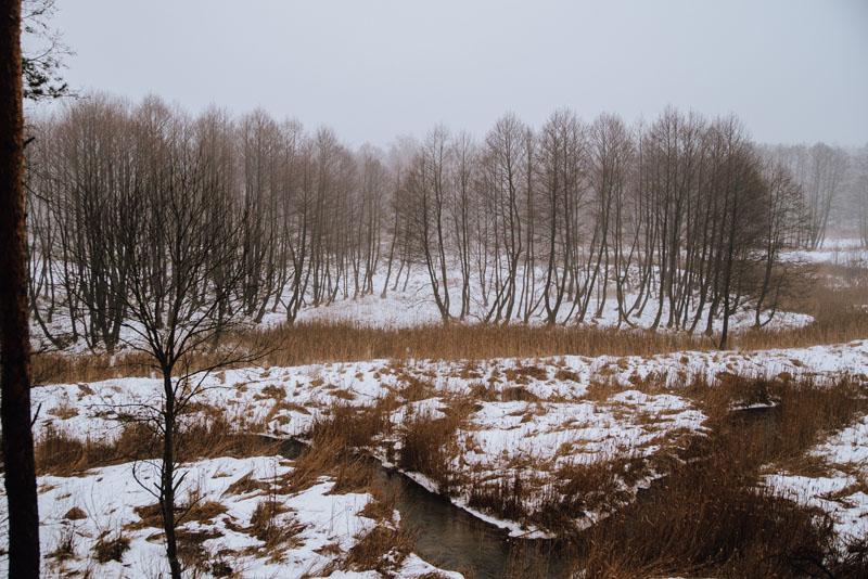 Lasy Błędowskie Bagna