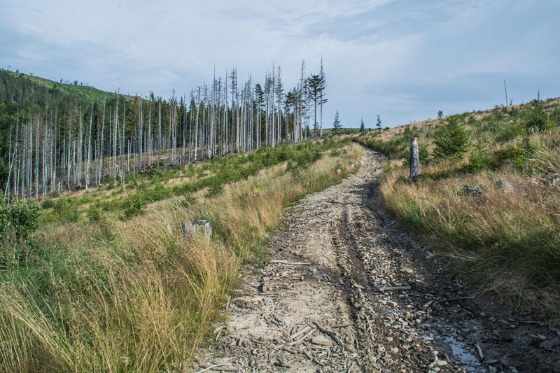 łatwy szlak na Malinowską Skałę