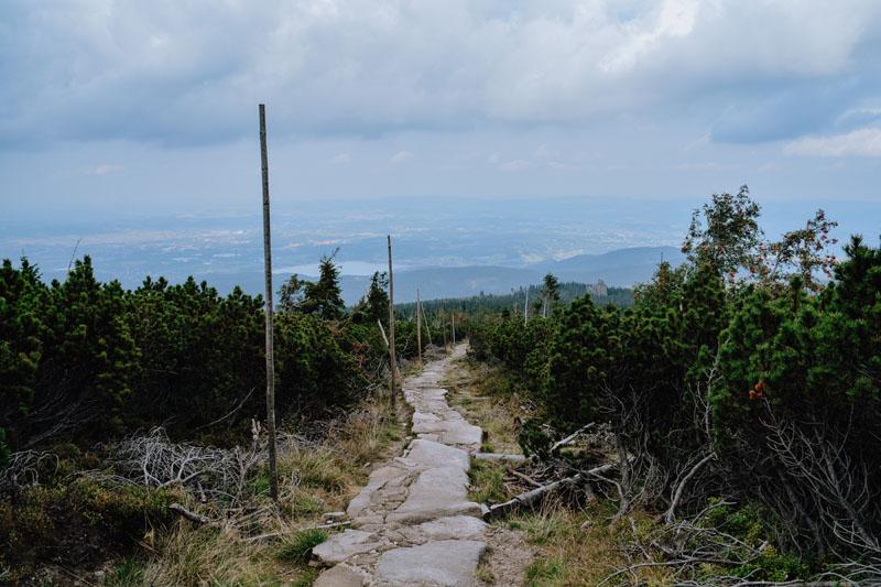 Trasa Pielgrzymy - Słonecznik