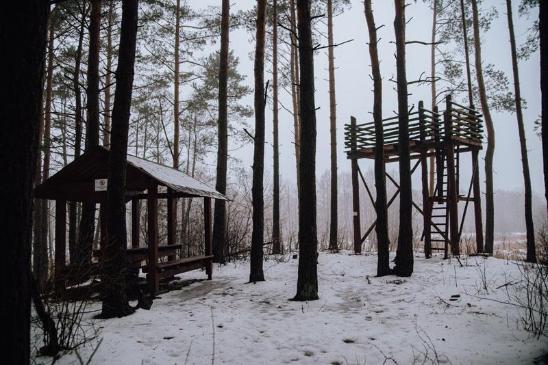 wieża widokowa lasy błędowskie