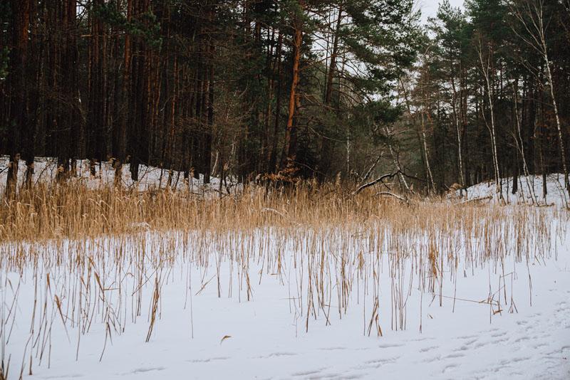Żabnik Jaworzno