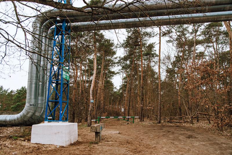 Dojazd do krzywych drzew