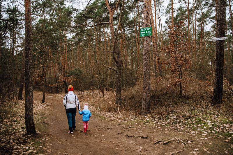 dojście do lasu