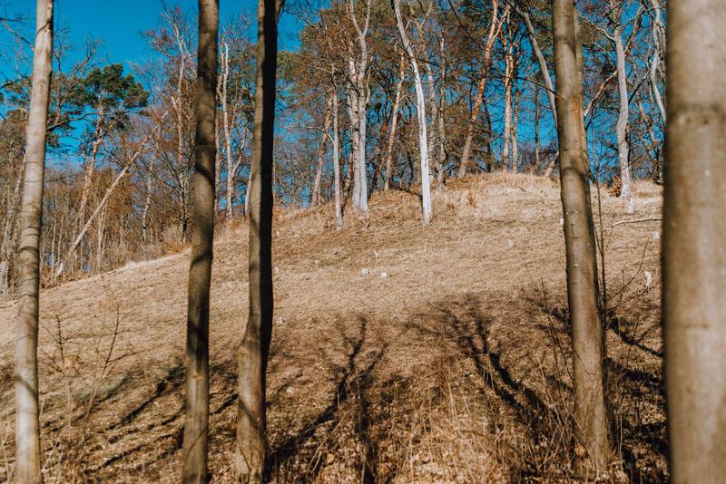 Las w Dolinie Miłości