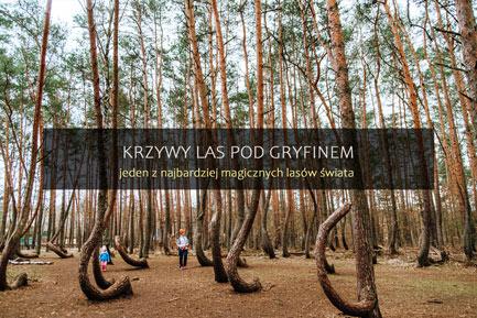 Krzywy Las w Polsce