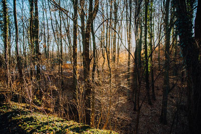 Leśny park zdroje szczecin