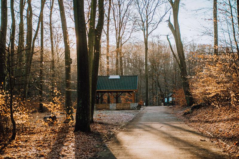 Park leśny zdroje