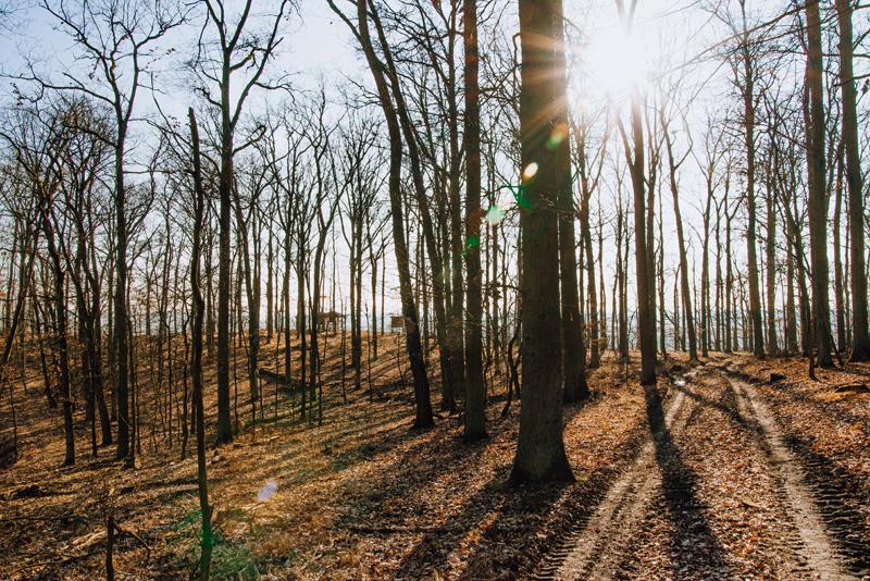 Rezerwat Cedynia