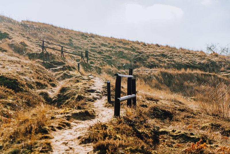 Ścieżka wrzosowiska cedyńskie