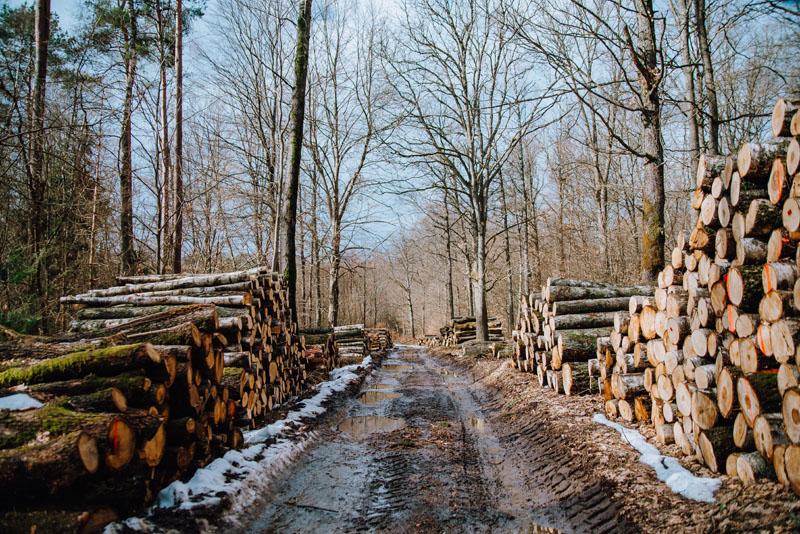 Składowisko drzewa w lesie