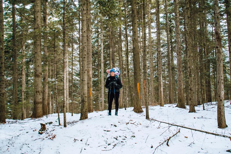 szczyt worecznik w lesie