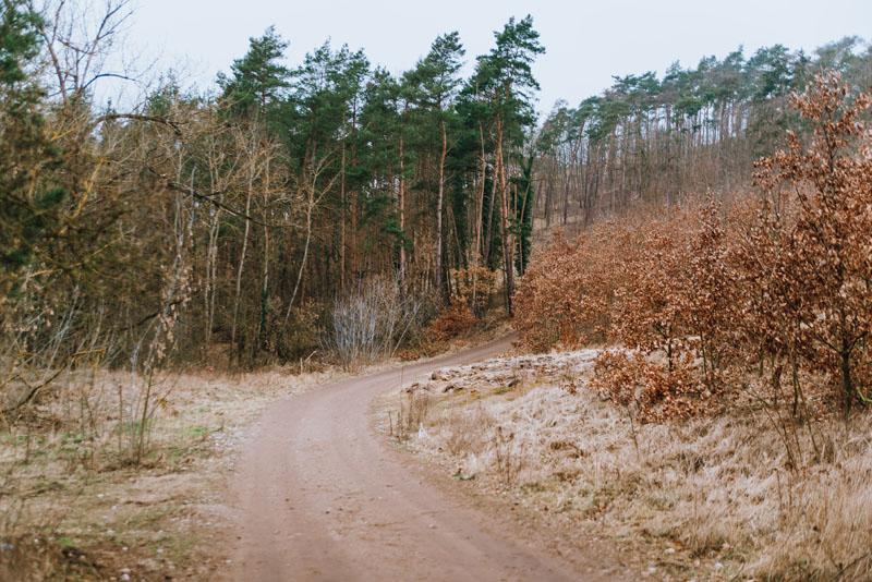szlak przez las widuchowa wieża