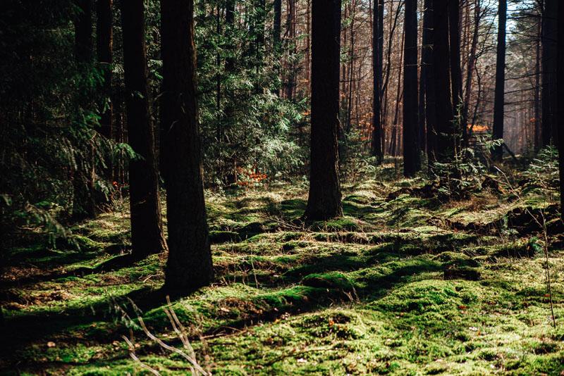 Szlak Wzgórza Krzymowskie