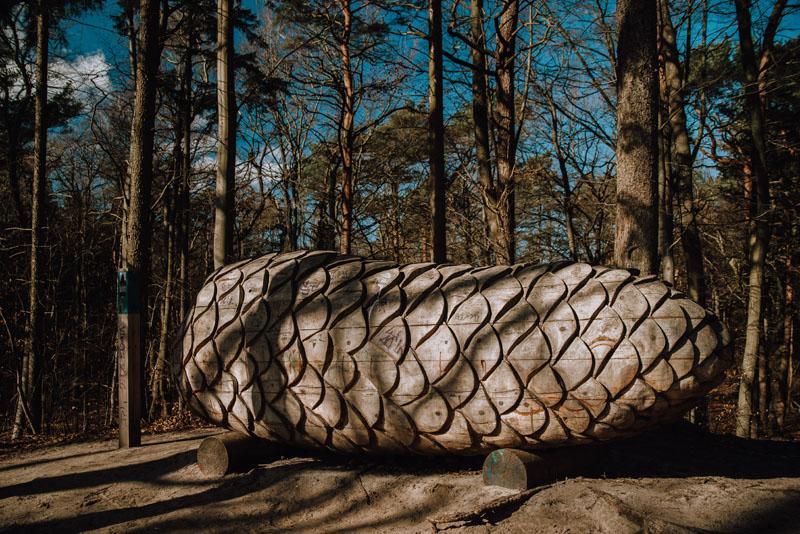 szyszka leśna