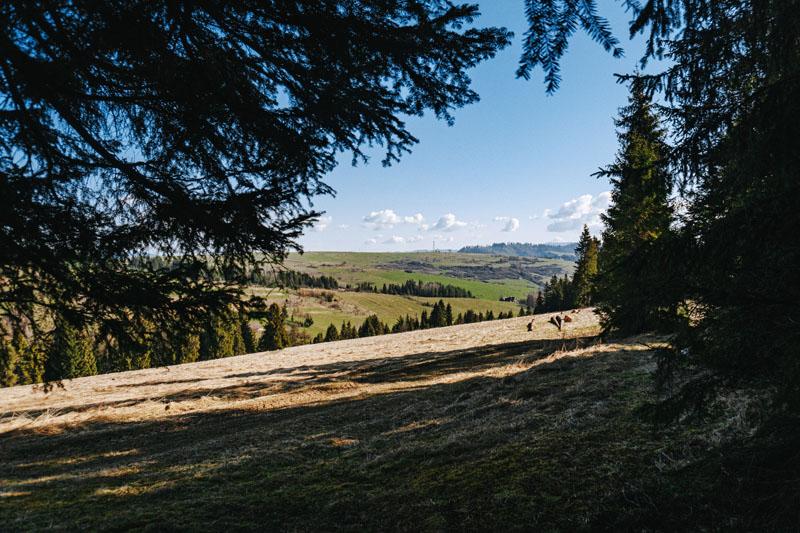 Widokowe łąki nad Łapszami Wyżnymi