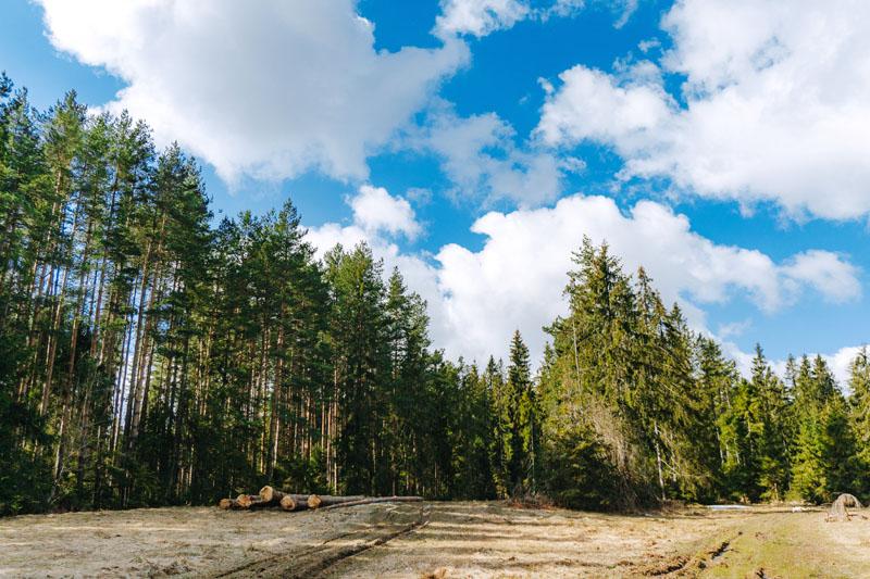 Później droga na Pawlikowski Wierch prowadziła przez las