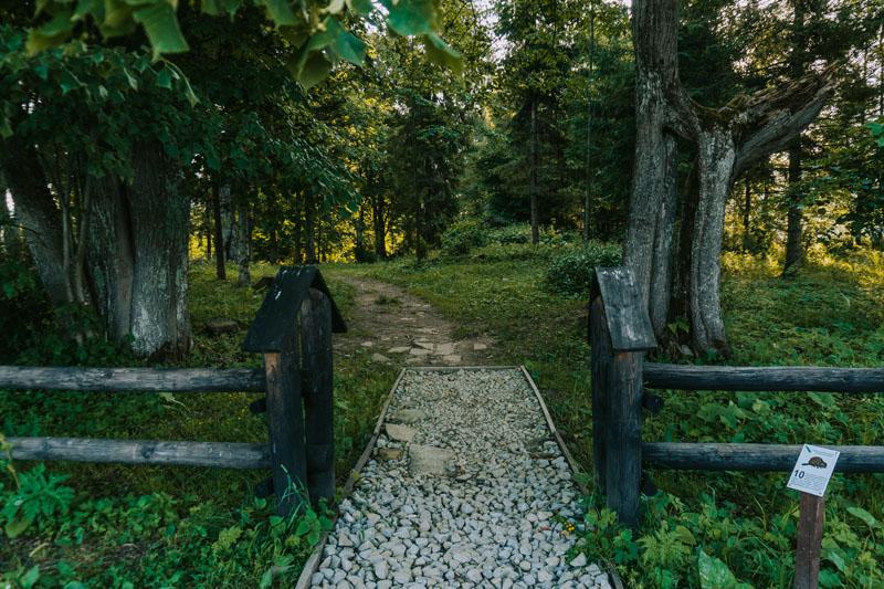 Cmentarze w Beniowej i lipa będąca świadkiem radosnych i smutnych dni
