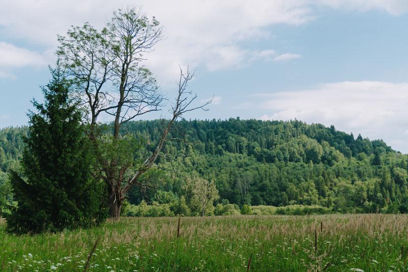 Ścieżka przyrodniczo-historyczna Dźwiniacz Górny