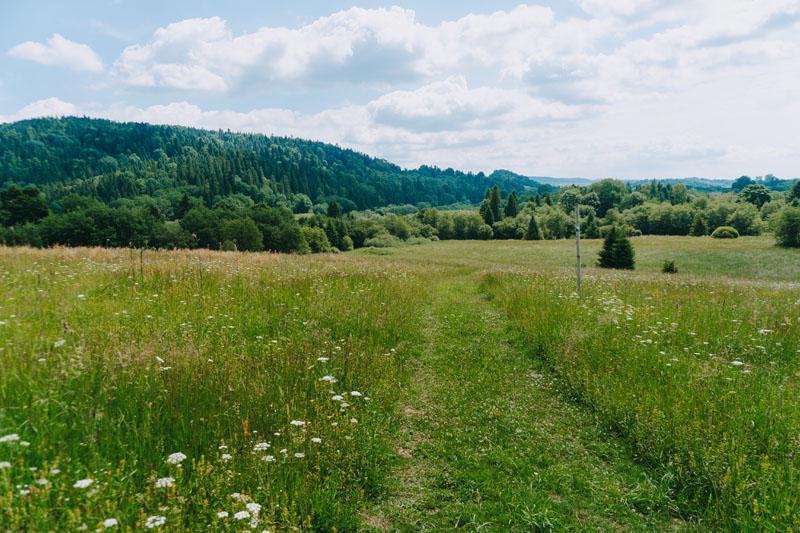 Tarnawa